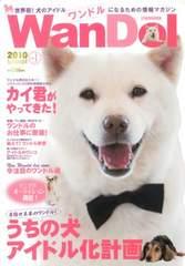 美品 ワンドル お父さん犬 カイくん 北海道犬