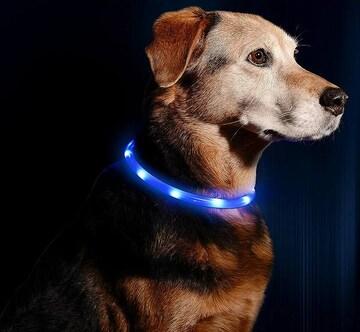犬用 光る首輪 充電式 散歩 アウトレット品 ブルー //b6k