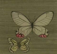 絵画 銅板画 石踊達哉 『蝶々』限定:60 真作保証