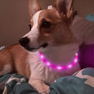 犬用 光る首輪 充電式 散歩 アウトレット品 ピンク //b6l