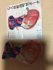 人体解剖模型ポーチ