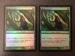 ●MTG WWK 東屋のエルフ/Arbor Elf 日本語 Foil 2枚●