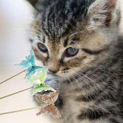 送料無料 ネコじゃらし 3本 猫じゃらし 蝶々 バタフライ