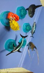 黒潮の魚たち17種類セット