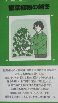 ガーデニング、観葉植物の越冬冊子